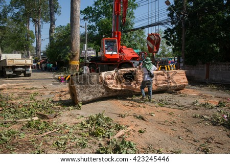 MUENG, CHIANGMAI/THAILAND MAY,18 2016: Officers salvage the huge tree trunk besides sarapee highway due to heavy rain disaster on May 17, 2016 in CHIANGMAI. Storm occurred at night of MAY 17, 2016.