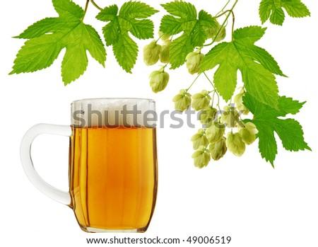 Mug of beer and fresh hops on white background - stock photo