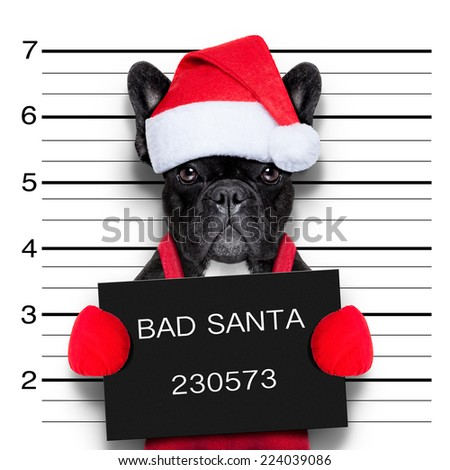 mugshot of a christmas santa bad dog - stock photo