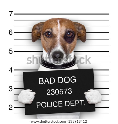 mugshot of  wanted dog holding a banner - stock photo