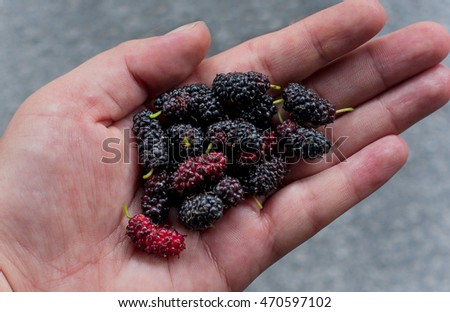 mulberries picture taken on hand