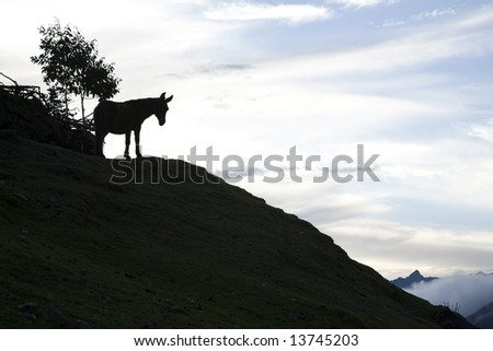 Mule overlooking the Andes at dusk in Peru. - stock photo