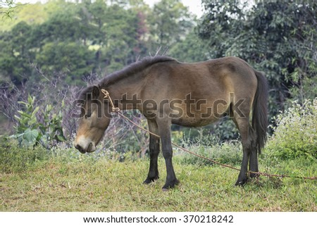 Mule standing with nature background