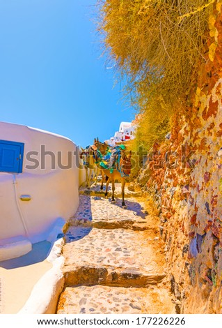 Mules is the main transportation way in Oia the most beautiful village of Santorini island in Greece - stock photo