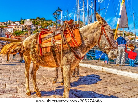 mules waiting to transfer tourists at the port of Hydra island in Saronic gulf in Greece. HDR processed - stock photo
