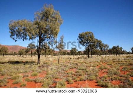 Mulga forest in the Petermann ranges west of Uluru, on the Great Central Road, Northern Territory, Australia.