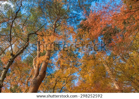 multi color trees in the autunm forest - stock photo