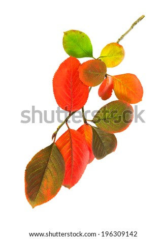 multi colored autumn leaves isolated on a white background - stock photo