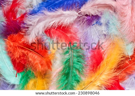 Multi-colored feathers as a background - stock photo
