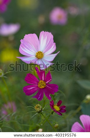 Multi-colored flowers grow in the meadow. Nature - stock photo