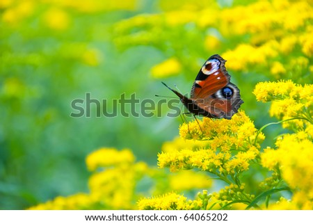 Multicolor butterfly sitting on a yellow flower - stock photo