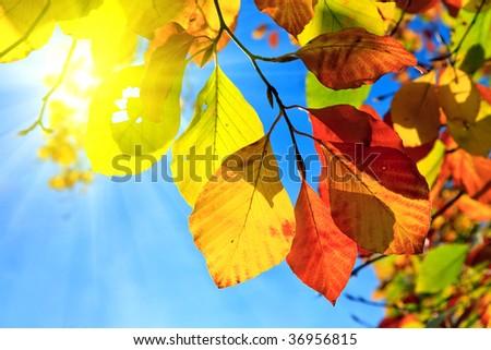 Multicolored autumn leaves - stock photo