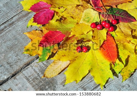 Multicolored autumn leaves background
