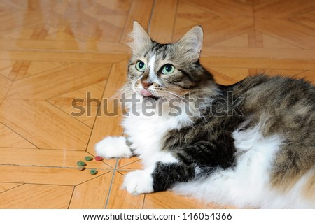 Multicolored cat lying on a floor - stock photo