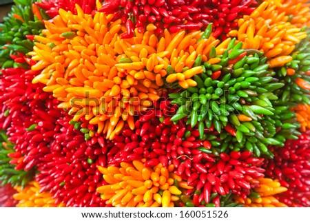 Multicolored chili pepper bunches on the Venice market, Italy  - stock photo