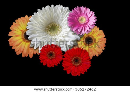 Multicolored flowers daisies on a black background - stock photo