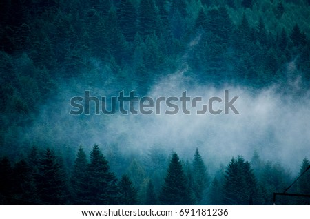 Multidimensional silhouette of coniferous forest with haze in contrast lighting