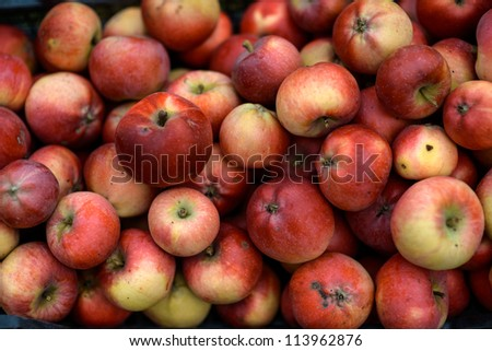 Multiple Apples in a box shown up close - stock photo