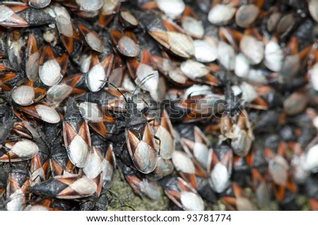 multitude of insects