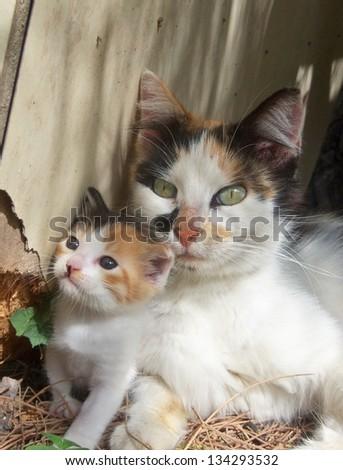 mummy cat and kitten - stock photo
