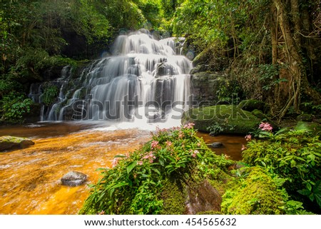 Mun-Dang's waterfall with antirrhinum flower which bloom only once a year  in Petchaboon province,Thailand