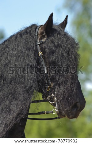 """MUNICH, GERMANY - JUNE 4: portrait of hairstyled Friesen horse while a public show at international equestrian challenge """"Pferd International 2011"""" at June 4, 2011 in Munich, Germany - stock photo"""