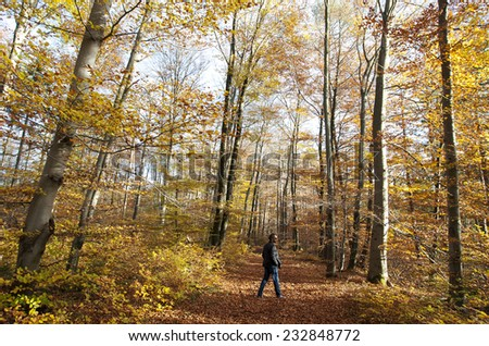 Munich, Germany - November 4, 2014 Walking through the autumn forest