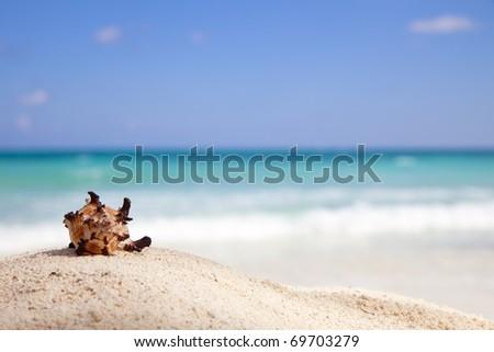 Murex Endivia sea shell on a beach, emerald green sea on background - stock photo