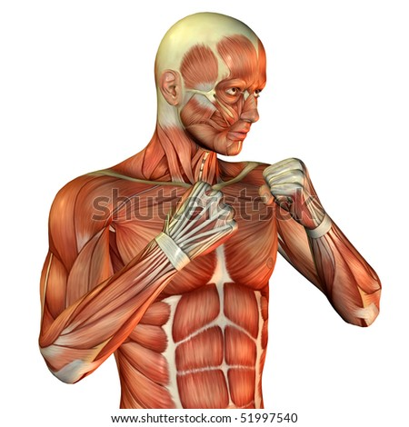 Muscle athletic male torso
