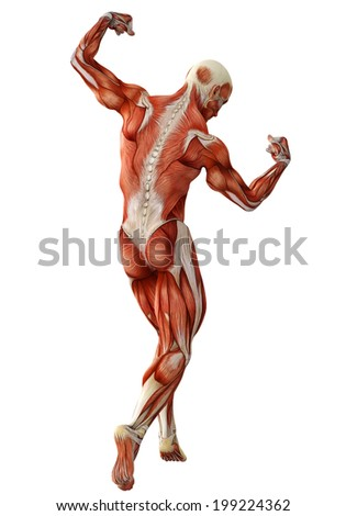muscle man back view - stock photo
