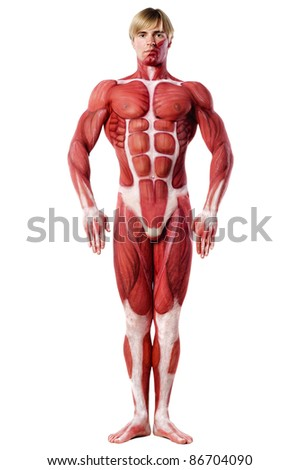 muscle man front view. Anatomy body-art. Isolated over white - stock photo