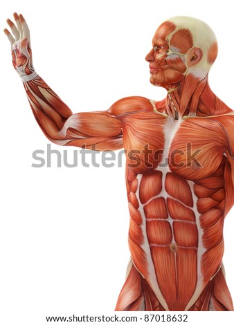 muscle man the touch - stock photo