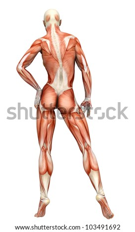 muscle woman back view - stock photo