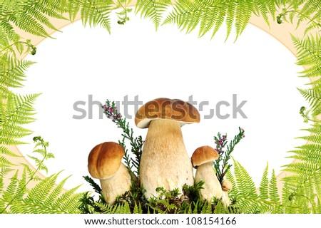 Mushroom and fern border - stock photo