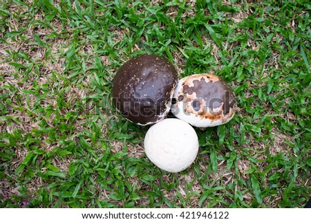 mushroom on Meadow