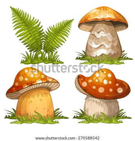 Mushrooms and ferns - stock photo