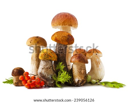 Mushrooms and rowanberry isolated on a white background - stock photo