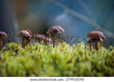 Mushrooms at the Junkyard - stock photo