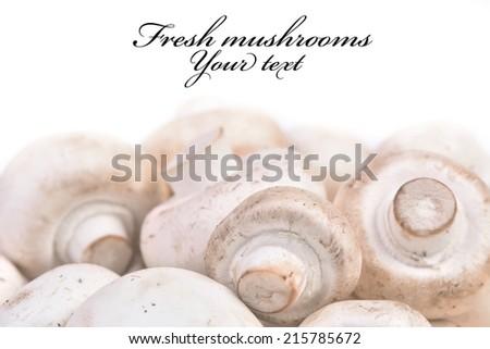 Mushrooms champignon - stock photo
