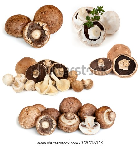 Mushrooms collection, isolated on white.  Button, Swiss, Portobello, oyster, field, brown varieties. - stock photo