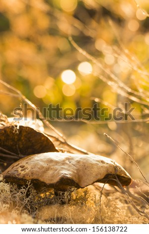 Mushrooms Growing at Vivid Forest Bed - stock photo