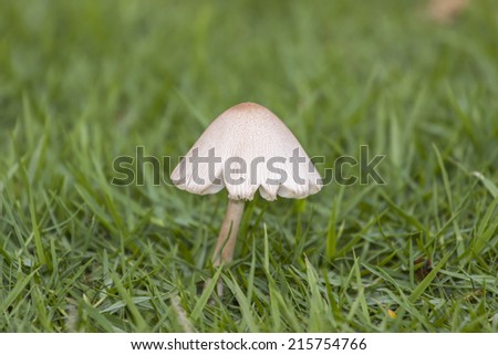 Mushrooms Growing in Grass - stock photo