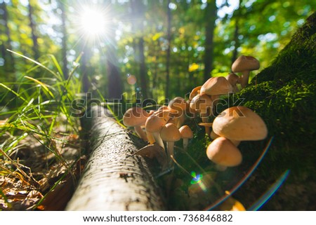 Mushrooms growing in grass. Gathering mushrooms. Mushroom photo.