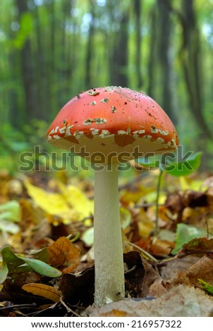 Mushrooms growing in the woods among the fallen leaves