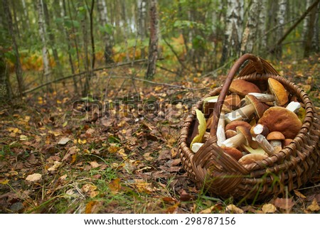 mushrooms in the basket - stock photo