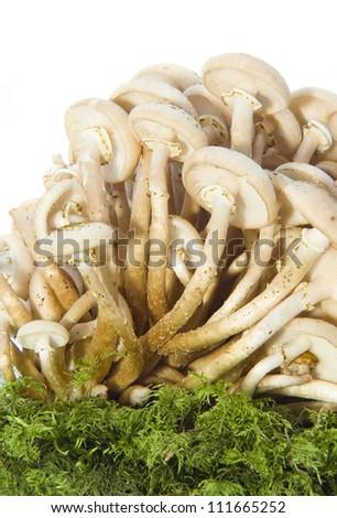 mushrooms isolated on white - stock photo