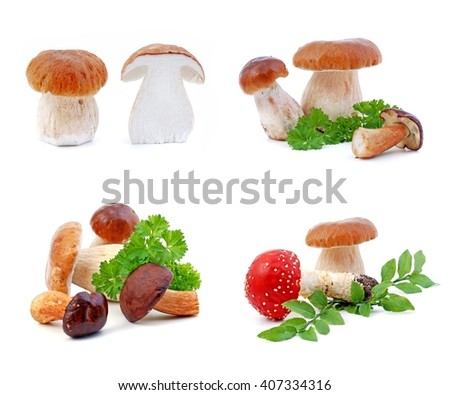 Mushrooms. Mushrooms - boletus mushrooms, boletus edulis mushrooms, on white background. Edible mushrooms. Poisonous red mushroom amanita muscaria. - stock photo