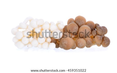 mushrooms, Shimeji mushroom, Edible mushroom isolated on white background - stock photo