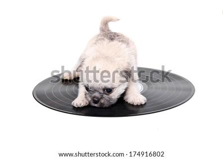 music record puppy - stock photo