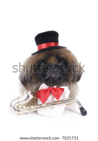 Musician brown Pekingese dog dressed in red bow tie and black top hat with saxophone isolated on white - stock photo